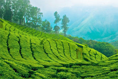 6 NIGHT 7 DAYS SPECIAL PACKAGES IN KERALA