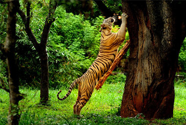 2 NIGHT 3 DAYS WAYANAD TOUR PACKAGES