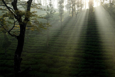 3 NIGHT 4 DAYS WAYANAD PACKAGES