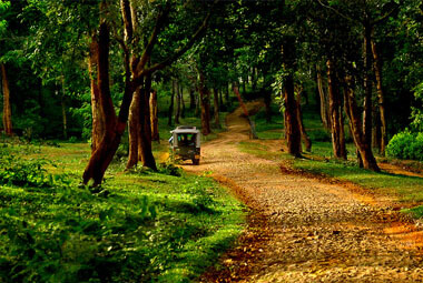 4 NIGHT 5 DAYS WAYANAD PACKAGES